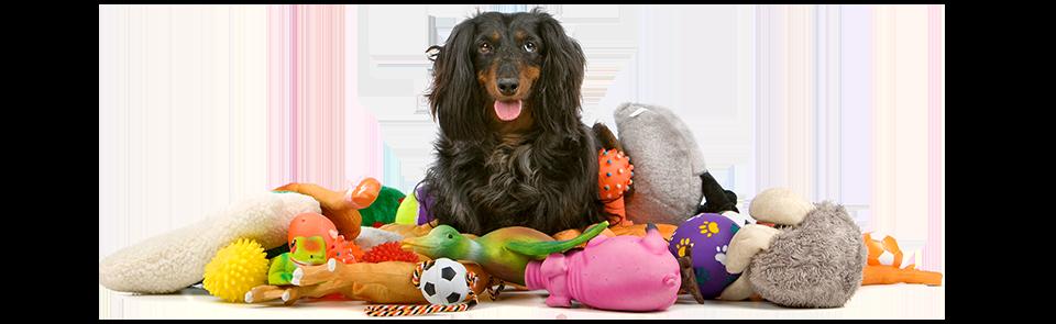 Nourriture, litière, accessoires et jouets!